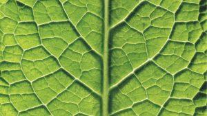de kracht van groene smoothies vol met groene bladgroenten